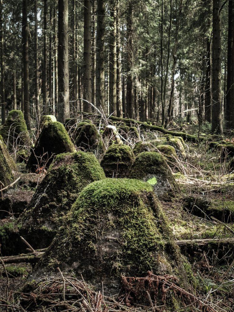Drachenzähne am ehemaligen Westwall im deutsch-belgischen Grenzgebiet